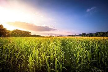 How phosphates feed the world